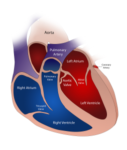 the hearth and its divisions